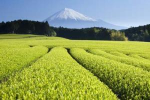 Grow Tea