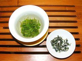Kuding tea Ligustrum robustum