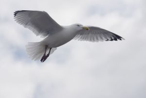 Seagull showing up with good news