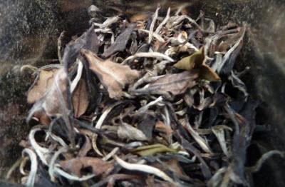 Forest White Hawaiian Tea