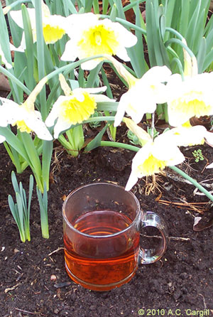Toast your gardening skills on June 6th with tea and get a real workout.