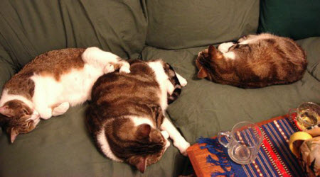 Getting a seat on the tea room sofa can be difficult once the kitties have settled in.
