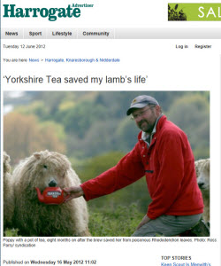 """Yorkshire Tea saved my lamb's life"""