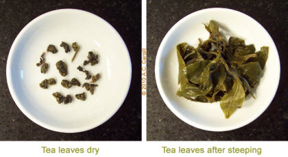 Sumatra Oolong Barisan – the small pellet shapes on the left steeped up to large leaf pieces, mostly whole, on the right. (Photo source: A.C. Cargill, all rights reserved)