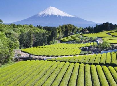 A very neat Japanese tea garden. (stock image)