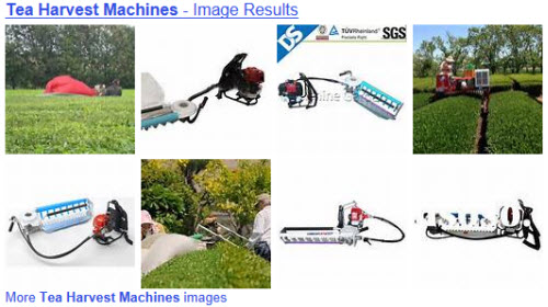 Tea harvest machines from Yahoo! Images