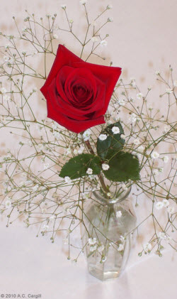 Real rose in small vase — just the right size for that bed tray! (Photo by A.C. Cargill, all rights reserved)