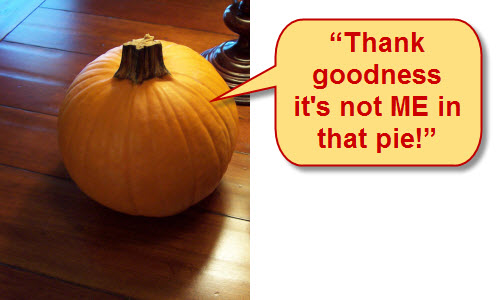 This pie pumpkin narrowly escaped his fate! (Photo by A.C. Cargill, all rights reserved)