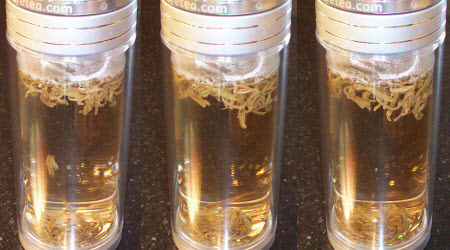 White tea steeping. Left to right: 30 seconds, 60 seconds, 90 seconds. (Photo by A.C. Cargill, all rights reserved)