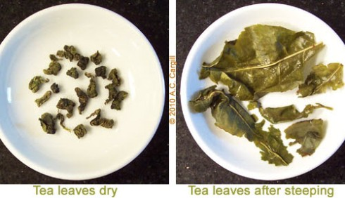 A Buddha Hand Oolong where the consistency of the leaves both dry and wet are not an issue in terms of determining quality. (Photo by A.C. Cargill, all rights reserved)