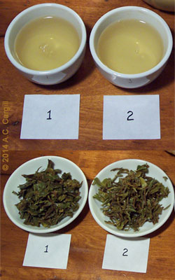 Darjeeling (#1) vs Nepalese (#2) (Photo by A.C. Cargill, all rights reserved)