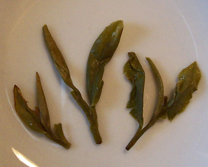 Longjing (Dragonwell) looks and tastes great (Photo by A.C. Cargill, all rights reserved)