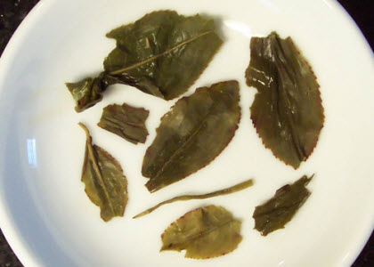 Spring Pouchong is a treat for all your senses! (Photo by A.C. Cargill, all rights reserved)