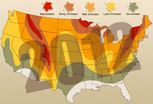 "A ""leaf peeping"" map so you can find the best ""shows""! (via Yahoo! Images)"