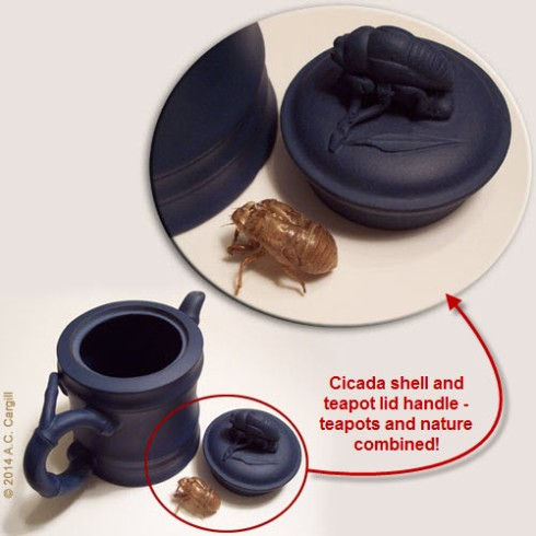 Cicada – real life versus teapot (Photo by A.C. Cargill, all rights reserved)