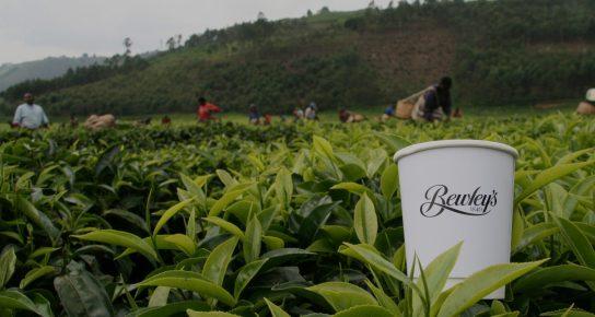 Rwanda-Tanzania-Sept-2014-122_low-1500x800.jpg