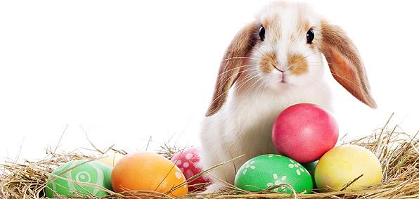 Happy-Easter-2016-2017-2018-2019-20202.jpg
